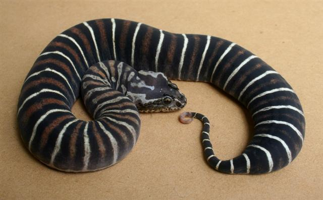 Scaleless Snakes: A Br...